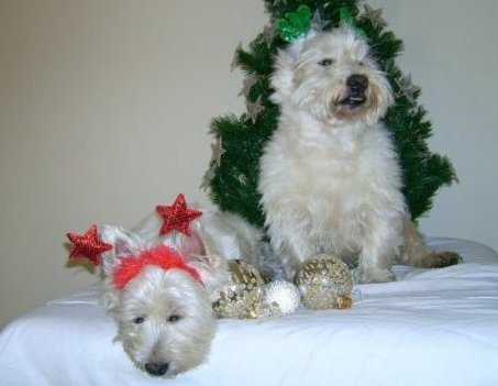 disco-christmas-fun-with-kessie-and-archie.jpg